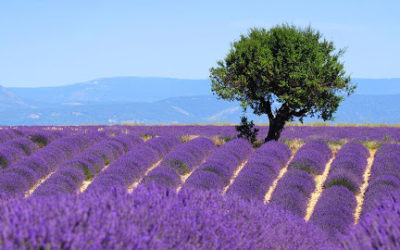 Verdon and its lavender landscapes