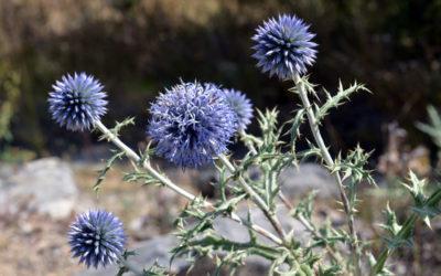 Le Rating et la flore du Verdon observée